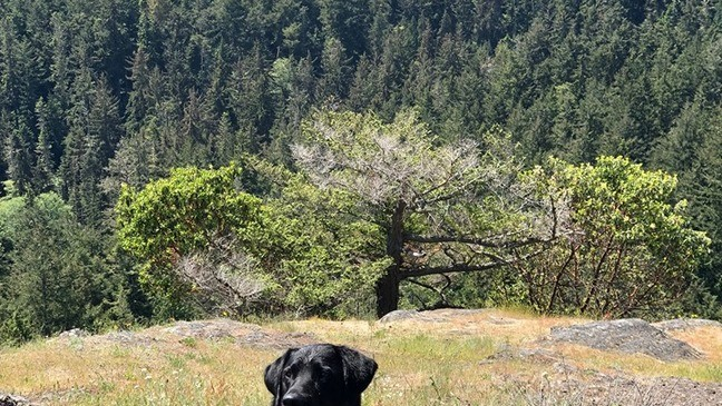 Toxic algae in Oregon waters: 'More often than not, a dog is